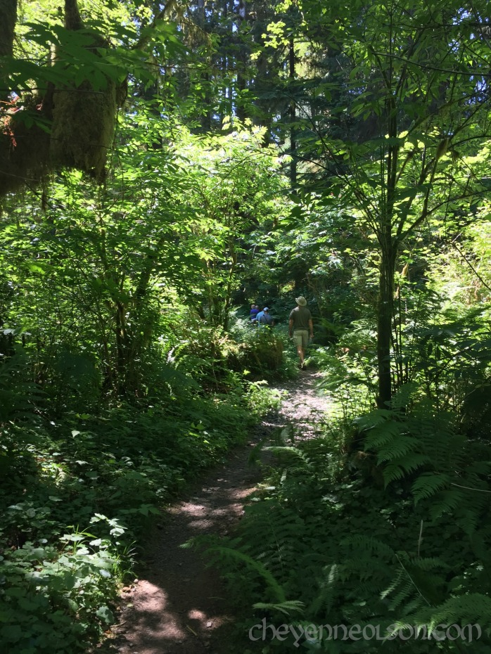 Path in woods WA